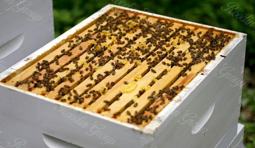 protect hive