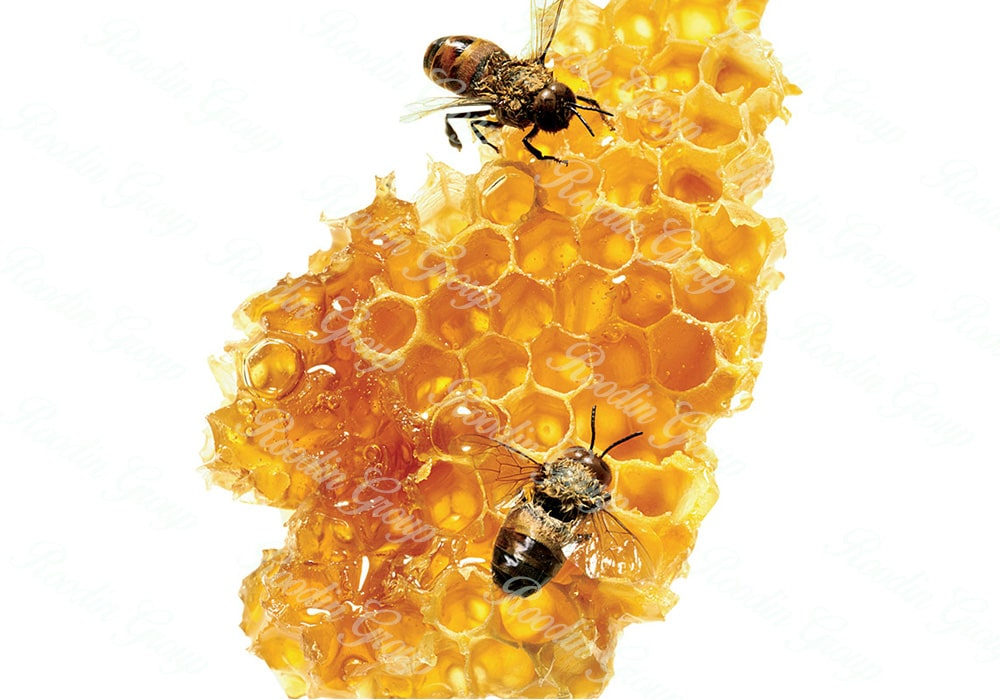 Honey Bee Wax Cost