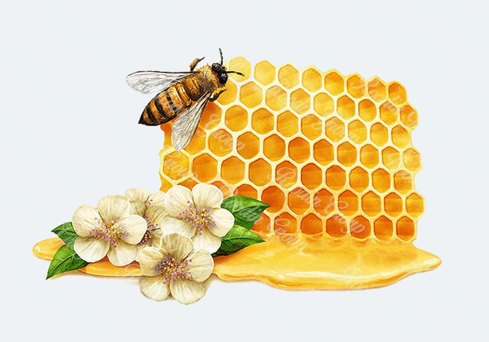 what is honey bee wax