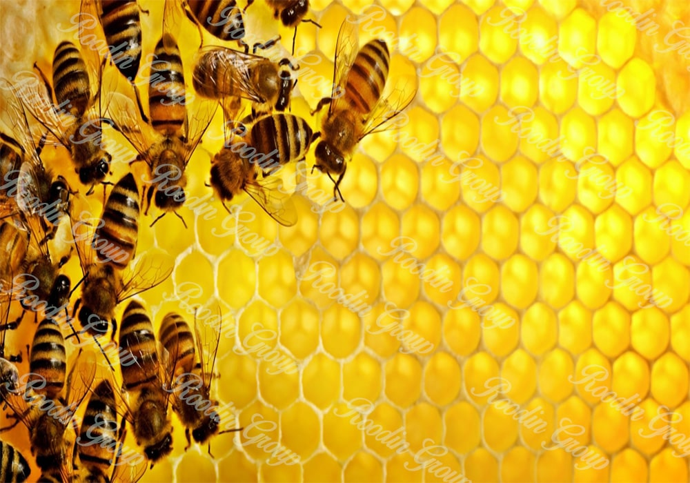 Honey Bee Wax Production