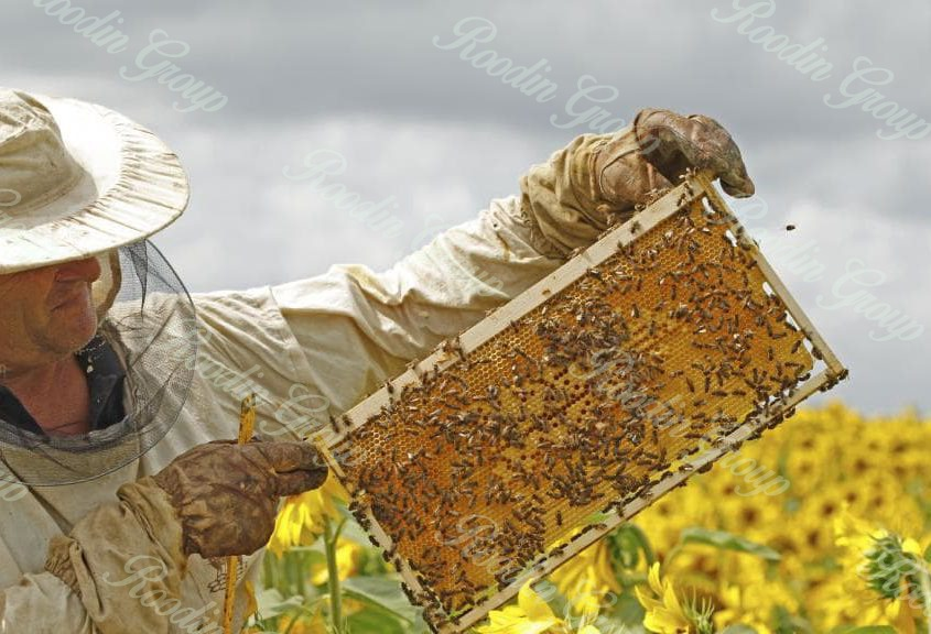 what is honey used for