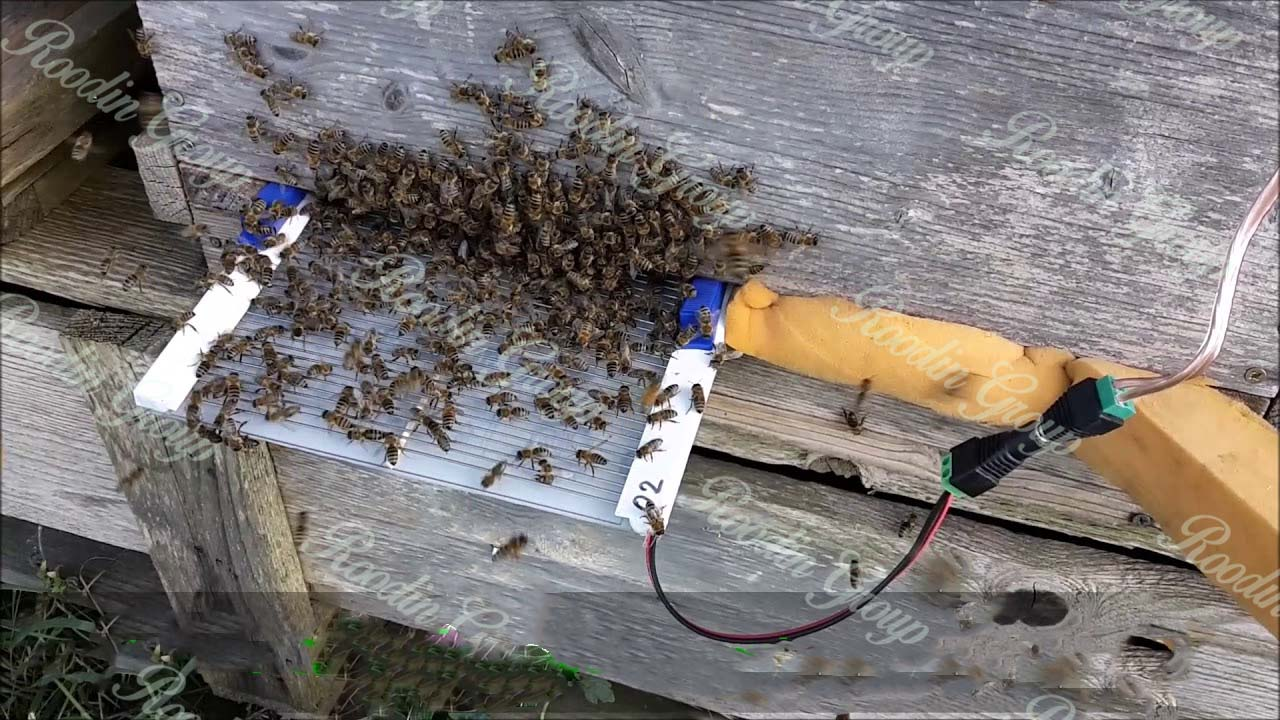 Honey bee venom collector