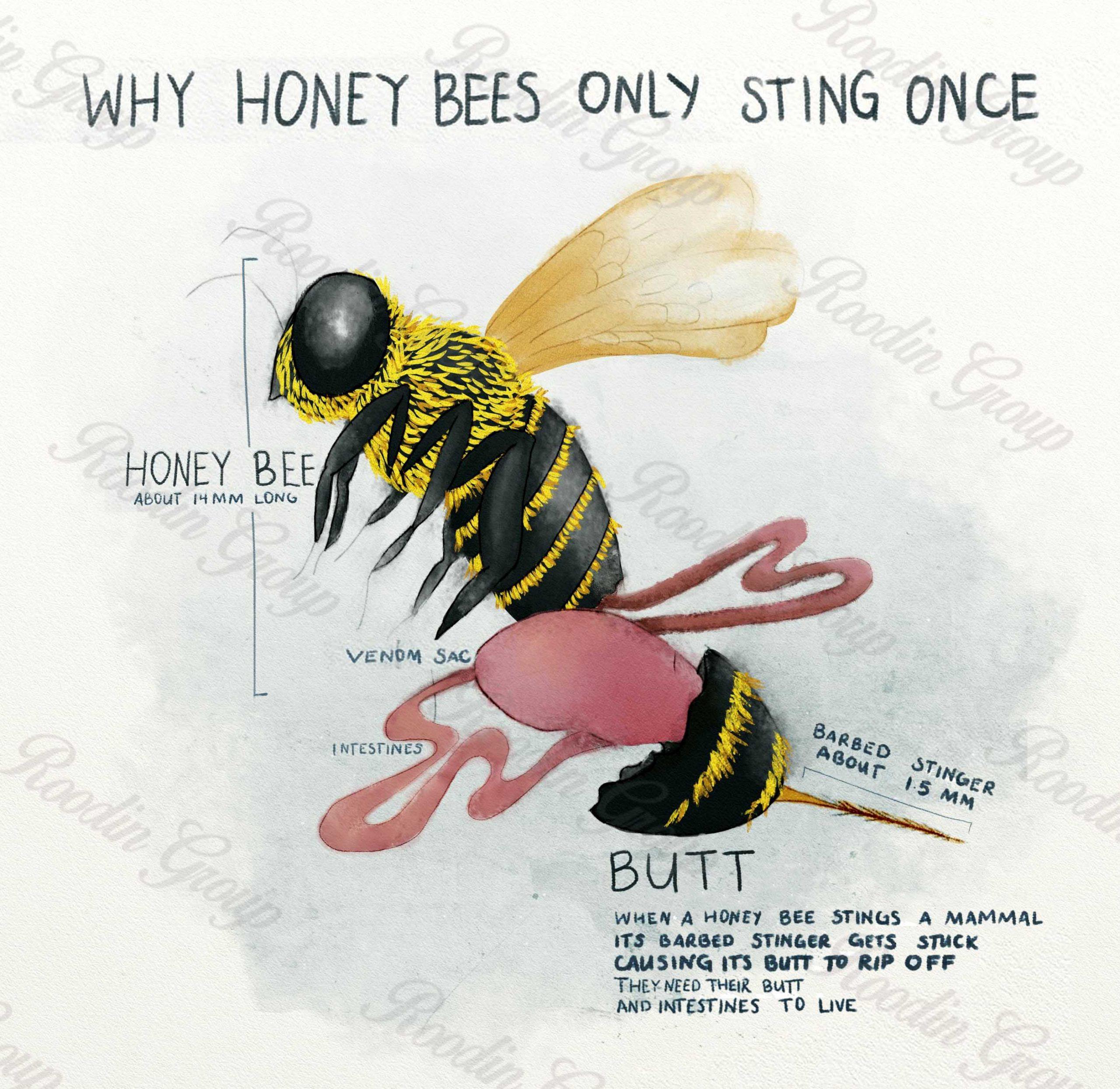 Honey bee venom production