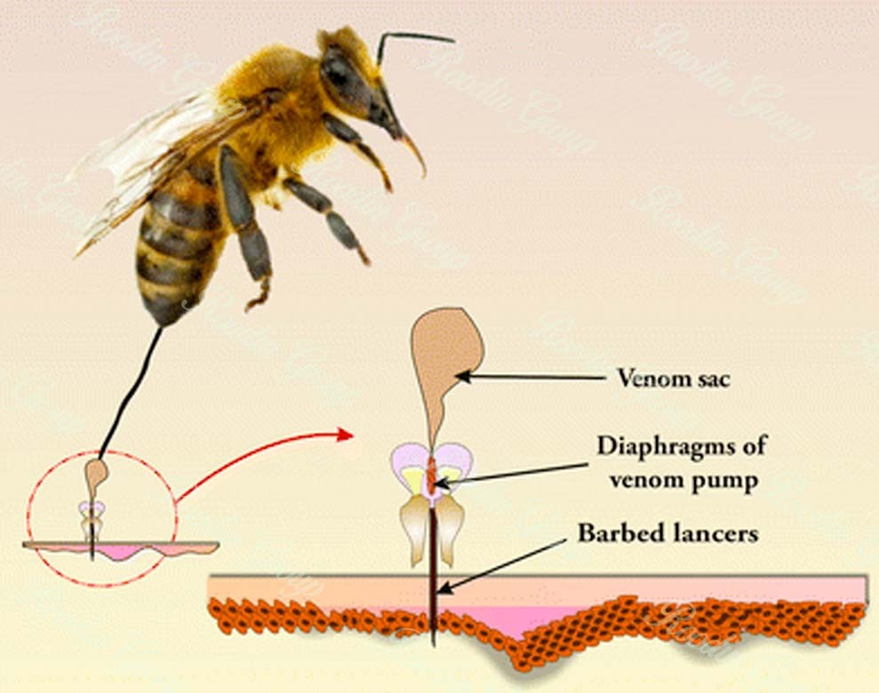 what does honey bee venom do